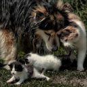 котята и собака