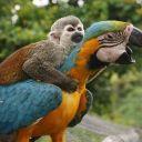 попугай и обезьянка