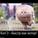 799370_kote-byistr-kak-veter