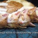 команда котов