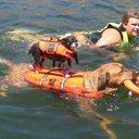 Собаки-плавцы