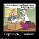 564906_beregis-slonik