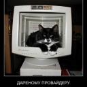 кот выглядывает из монитора
