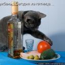 кот с водкой и фруктами