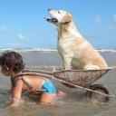 собака в тележке